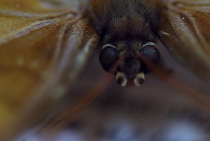 ¡Oh Mariposa! ¿Qué sueñas cuando agitas tus alas?